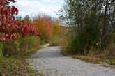 Beautiful October colors on Mammoth Cave Trail