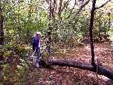 dg-mountain-bike-trail_1261-16p.JPG (6555 bytes)